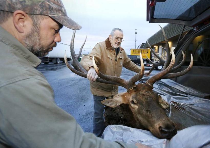 Back of car elk