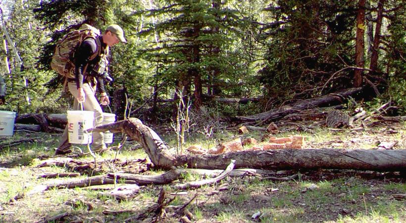 Hauling the bear bait