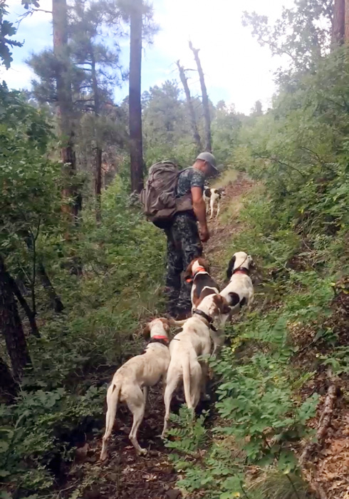 Hiking with hounds after black bears