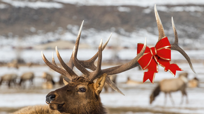Holiday gift ideas for the western hunter