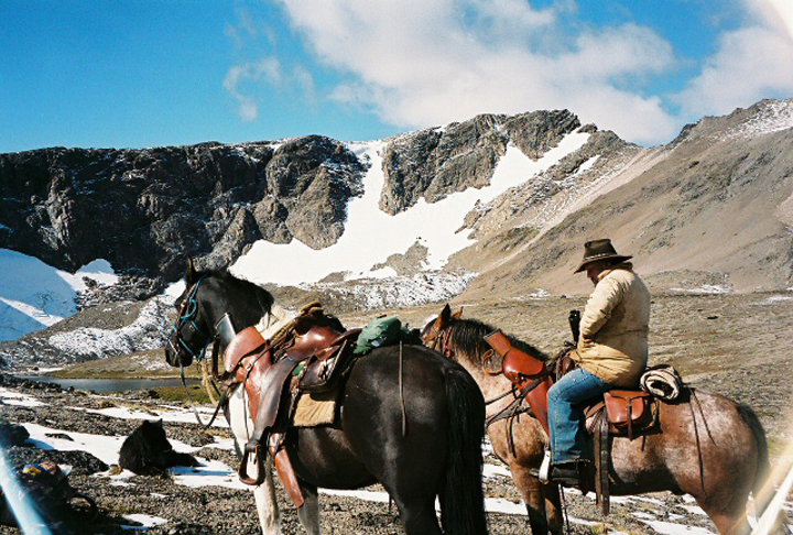 Horses in mountain goat country