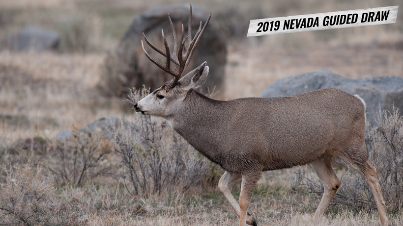 How to apply for the 2019 Nevada guided mule deer draw