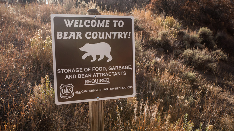 How to hunt in grizzly bear country