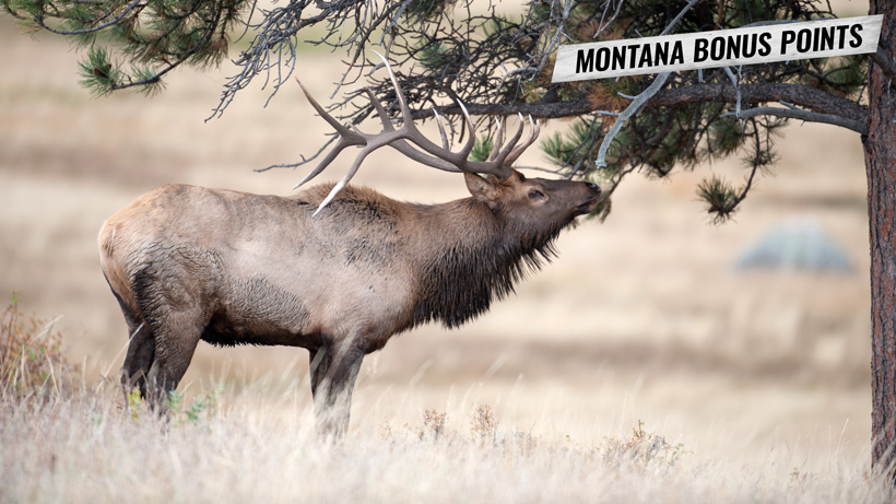 How to purchase Montana bonus points for hunting