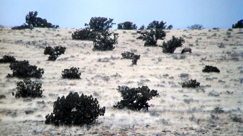 Hunting elk in Arizona