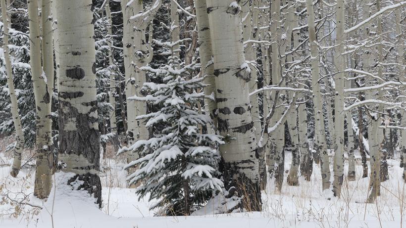 Hunting elk in the snow