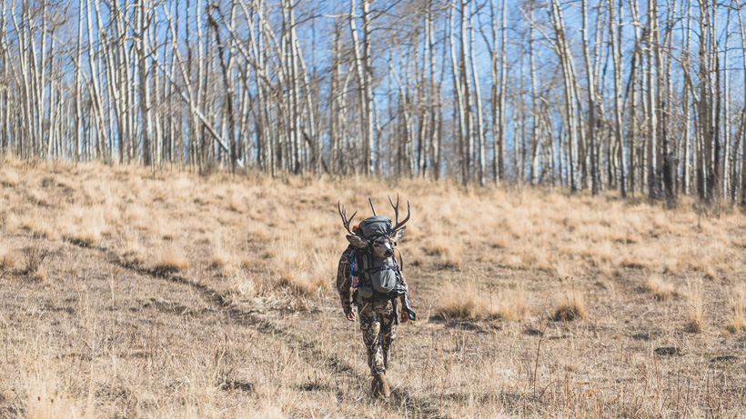 Hunting thick aspens to find mule deer