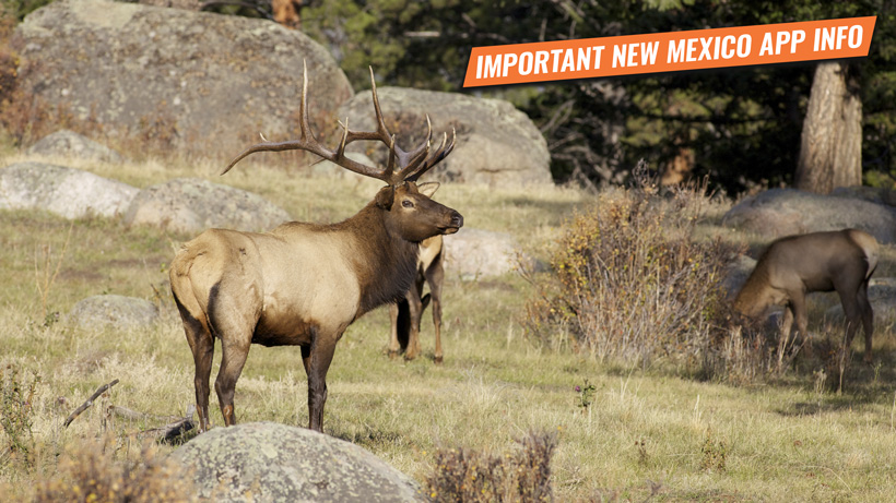 Hunt nonresidents cannot apply for in New Mexico