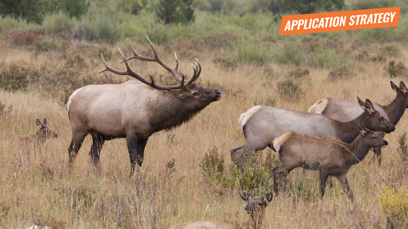 Idaho 2018 elk and antelope application strategy article