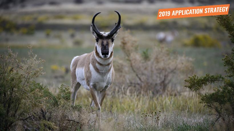 Idaho 2019 antelope app strategy