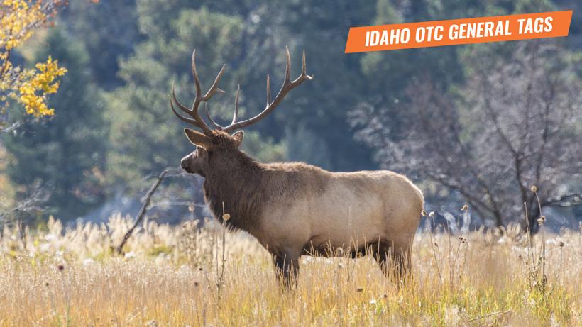 Idaho 2020 general season tag purchase