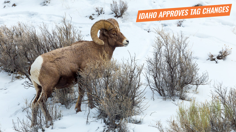 Idaho approves new sheep moose mountain goat tag changes