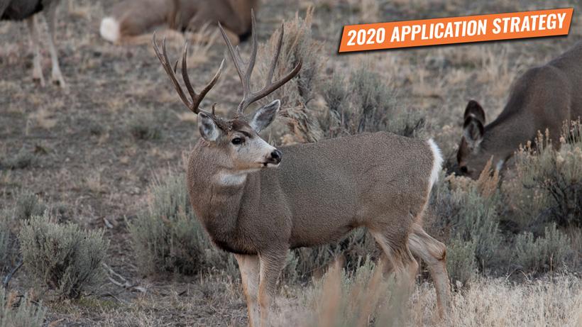 Idaho elk, mule deer, and antelope application strategy 2020