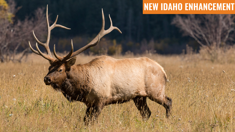New Idaho enhancement
