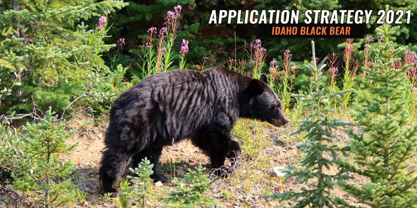 Idaho spring black bear controlled hunt application strategy