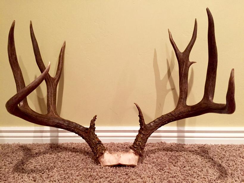 Jeremiah Blain Idaho mule deer buck skull cap