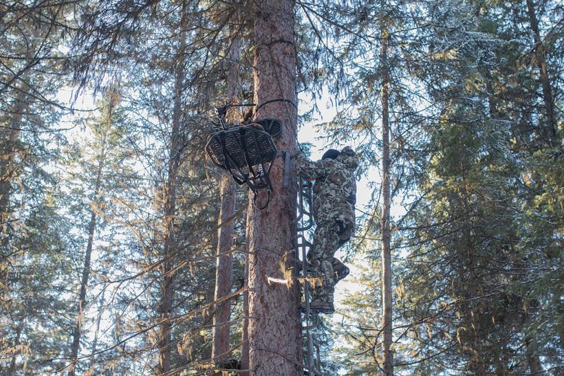 Jon Gabrio climbing up a tree