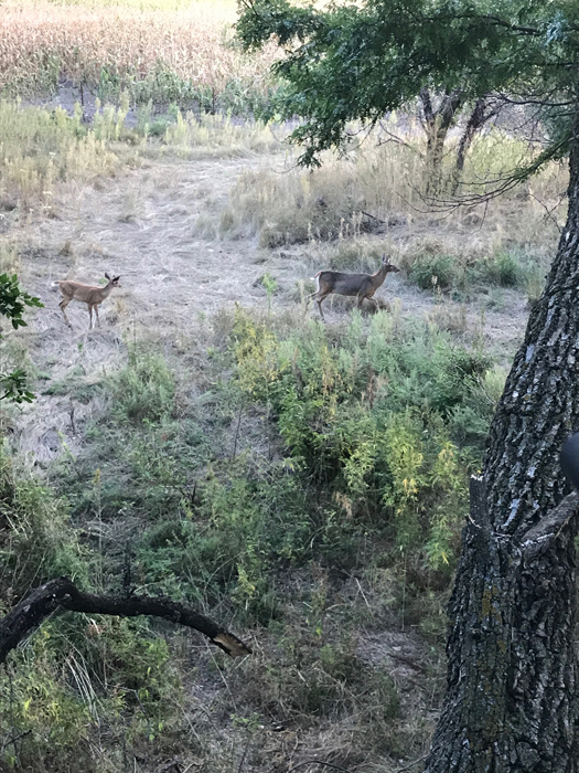 Does and fawns from several different hunts on different properties.