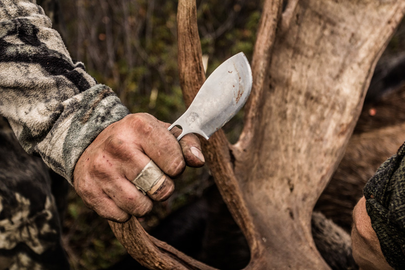Kestrel Knife cutting up bull moose