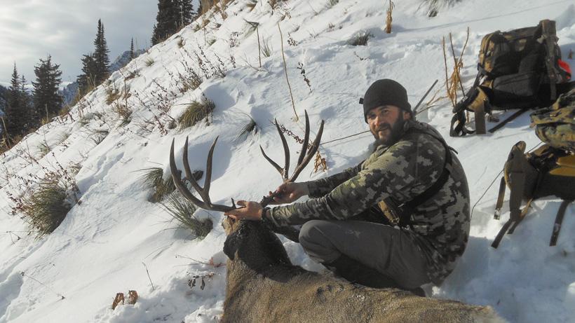 Mule Deer Back View