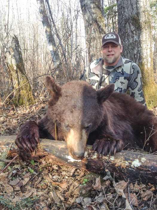 Large Montana black bear taken with Scapegoat Wilderness Outfitters