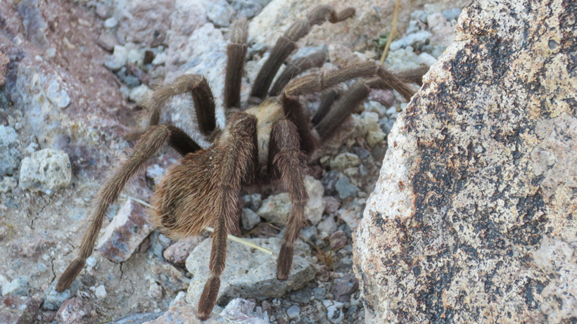 Large spider found while hunting