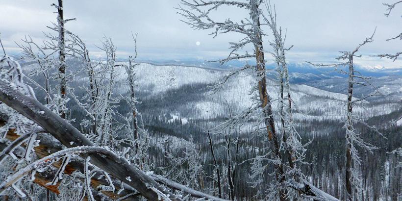 Late season elk hunting conditions