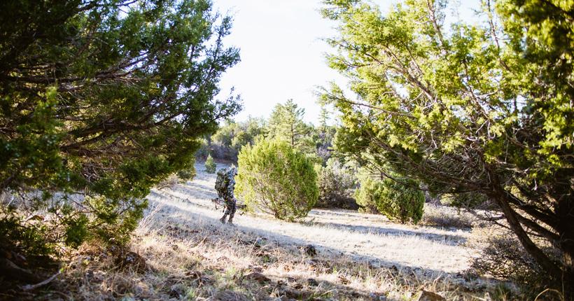 Looking for Arizona black bears