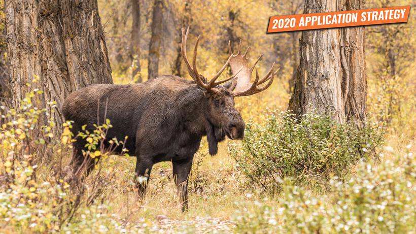 Application strategy 2020: Utah moose, sheep, goat and bison