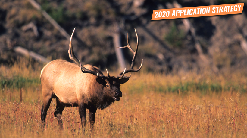 2020 Application Strategy: Montana Elk