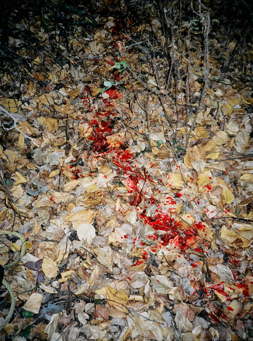 Massive blood trail