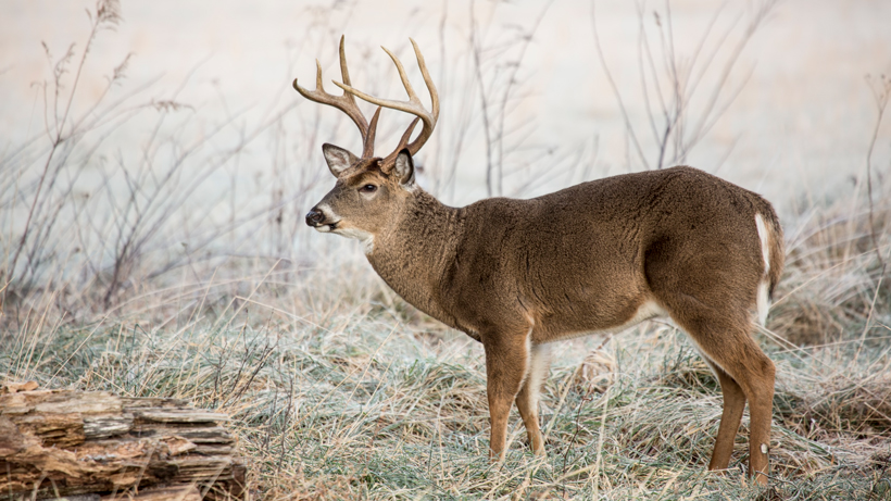 Michigan hunters venison donations
