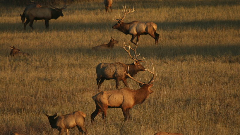 Wyoming elk hunt court case