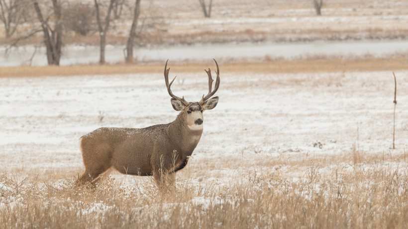 Cwd advances within montana gohunt for Montana fish wildlife and parks drawing results