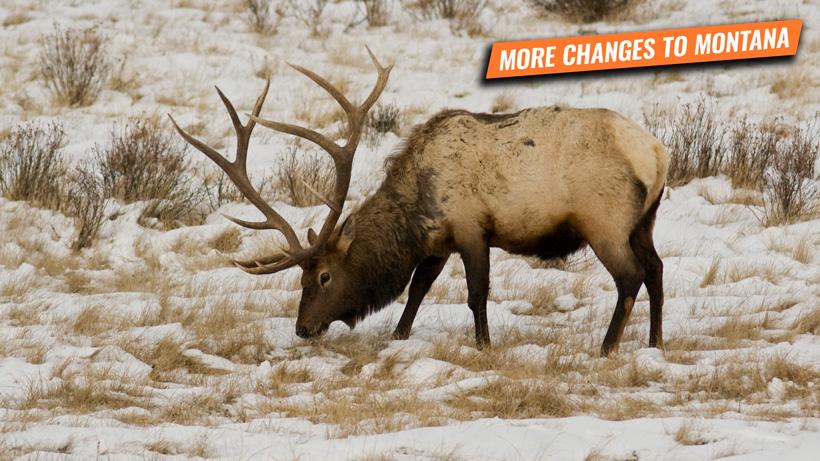 Montana HB 417 removes special permit allocation