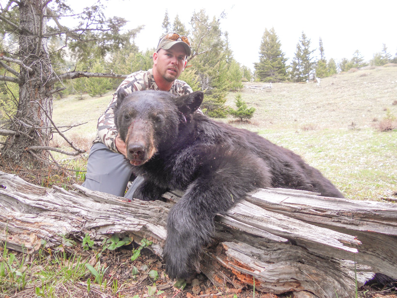 Montana black bear taken with Scapegoat Wilderness Outfitters