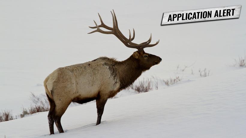 Montana deer elk application deadline change