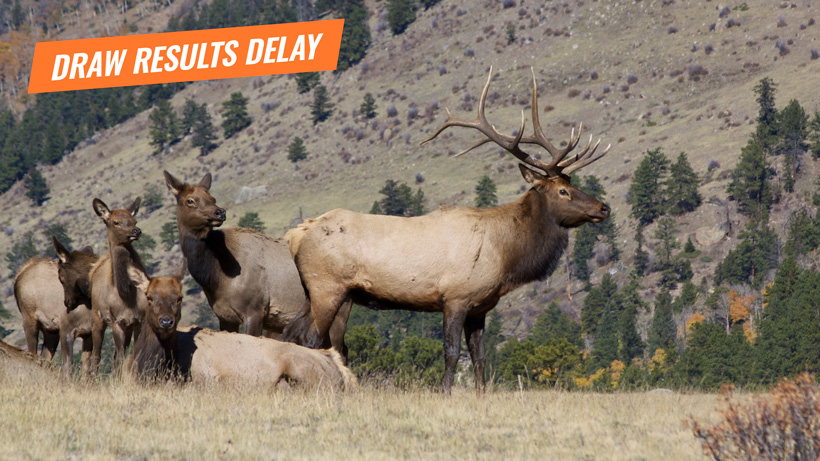 Montana draw results delay for deer and elk