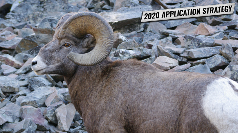 MONTANA'S 2020 BIGHORN SHEEP, MOOSE, MOUNTAIN GOAT AND BISON APPLICATION OVERVIEW