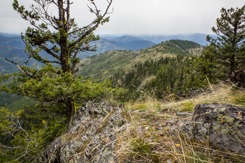 Montana spring bear hunting scenery