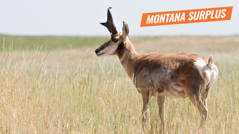 Montana surplus antelope tags