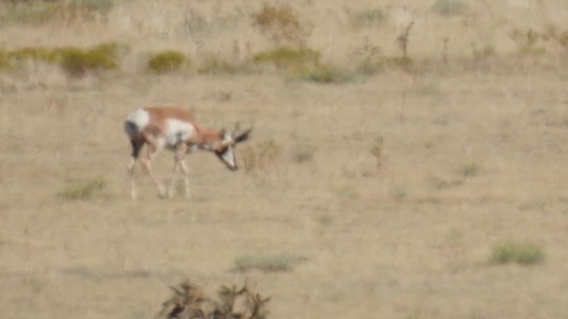 More scouting photos of antelope