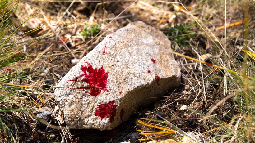 Mule deer blood dropping on rock