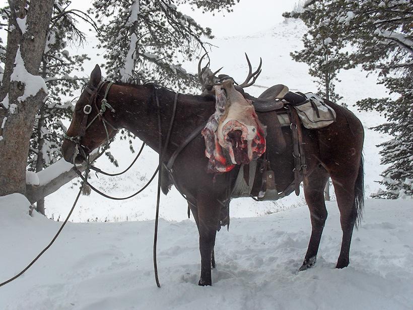 Mule deer buck on horseback