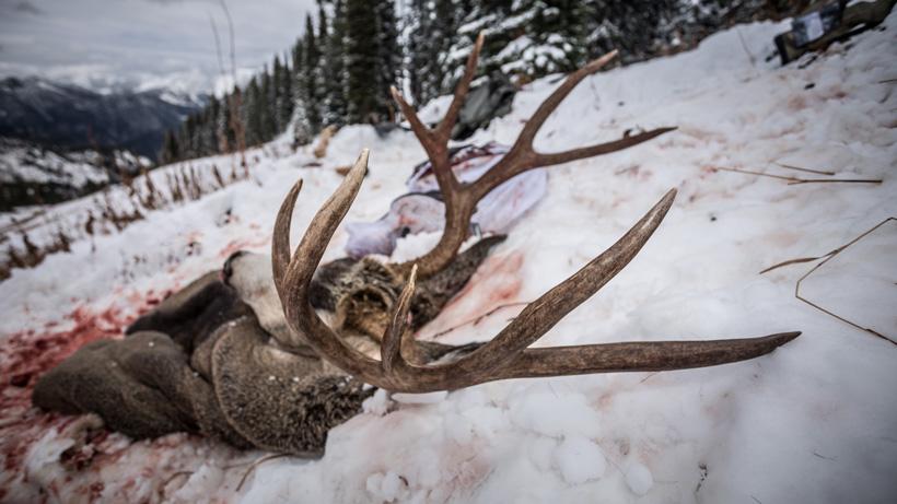Mule deer kill site in Wyoming