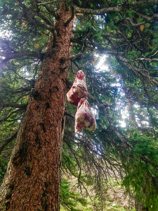 Mule deer meat hanging in a tree