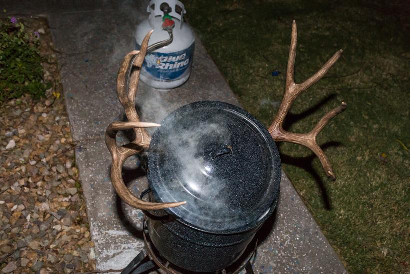 Mule deer skull in pot