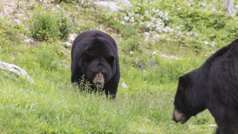 NJ hunters kill 62 black bears on opening day
