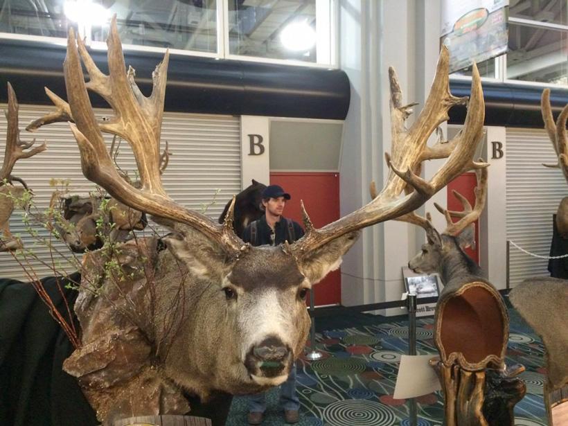 Nate Strong poached Wyoming mule deer buck