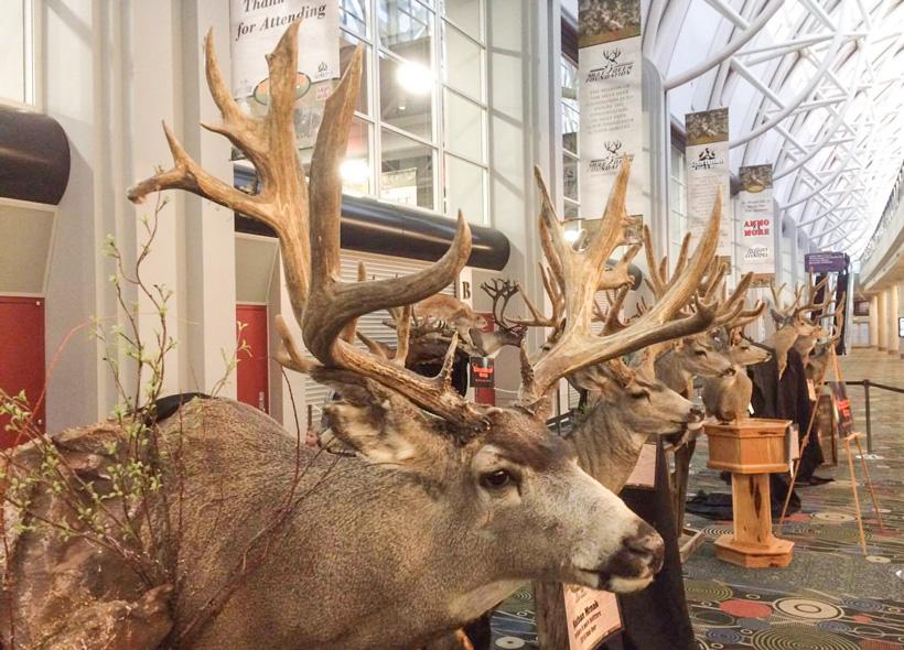 Nate Strong poaching case update on Wyoming mule deer buck
